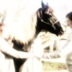 "Stage ""Communication animale et Horsemanship"""